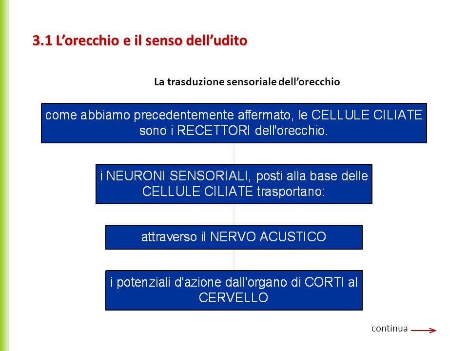 3.1 Lorecchio e il senso delludito continua La trasduzione sensoriale dellorecchio