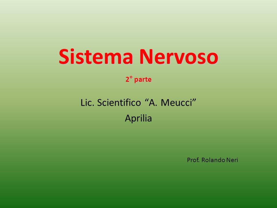 Sistema Nervoso 2° parte Lic. Scientifico A. Meucci Aprilia Prof. Rolando Neri