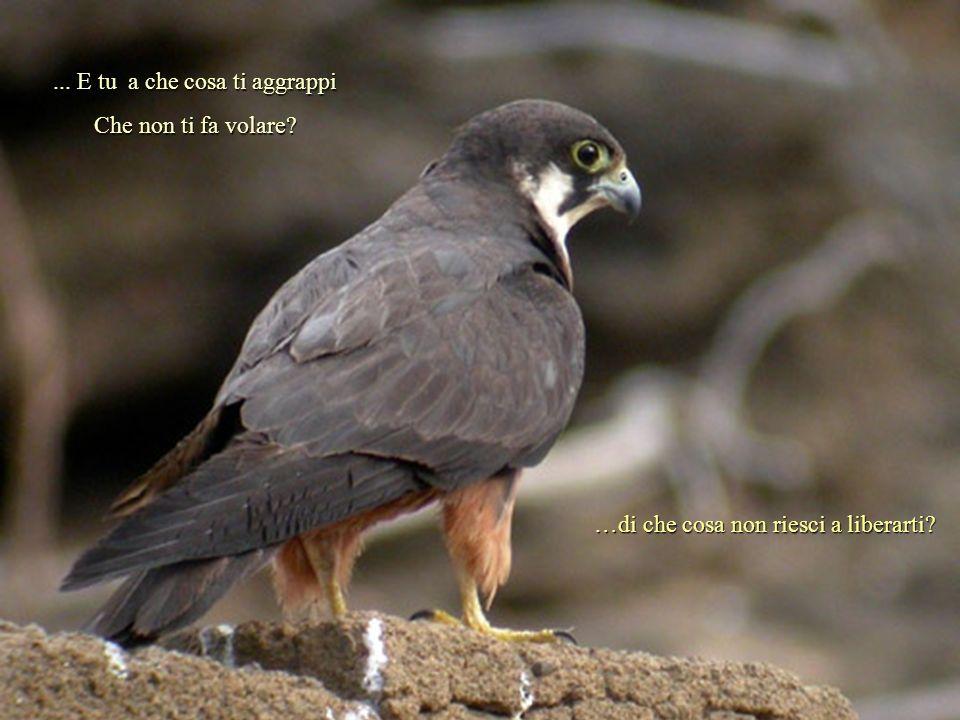 Le cronache raccontano che da quel momento il falcone volò libero, senza nessuna restrizione...