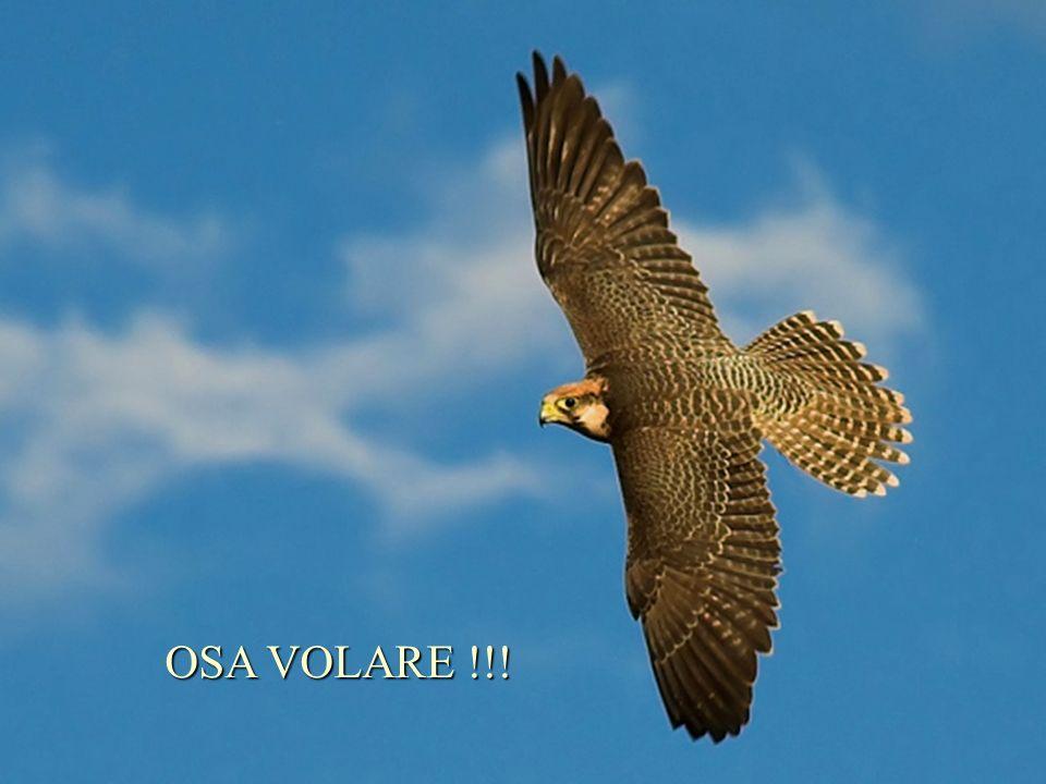 Smetti di afferarrarti al tuo ramo e corri il rischio di volare più in alto...