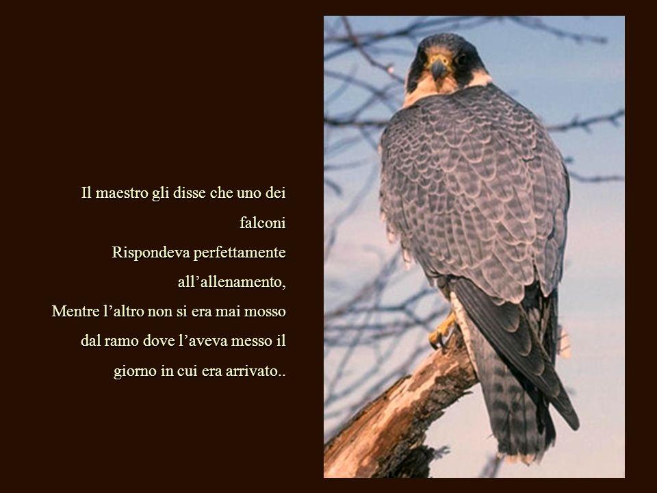 Il maestro gli disse che uno dei falconi Rispondeva perfettamente allallenamento, Mentre laltro non si era mai mosso dal ramo dove laveva messo il giorno in cui era arrivato..