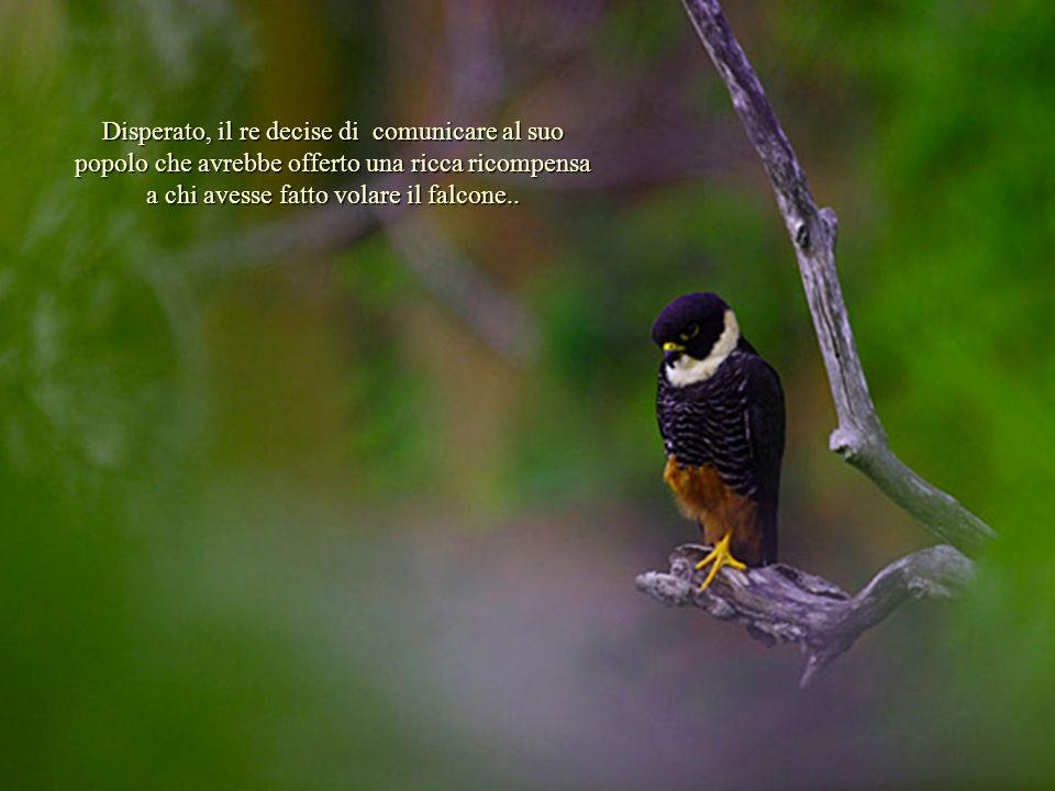 Disperato, il re decise di comunicare al suo popolo che avrebbe offerto una ricca ricompensa a chi avesse fatto volare il falcone..