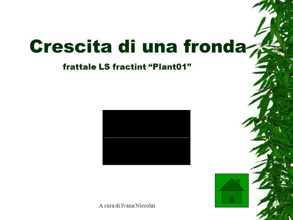 A cura di Ivana Niccolai frattale LS fractint Plant01 Crescita di una fronda