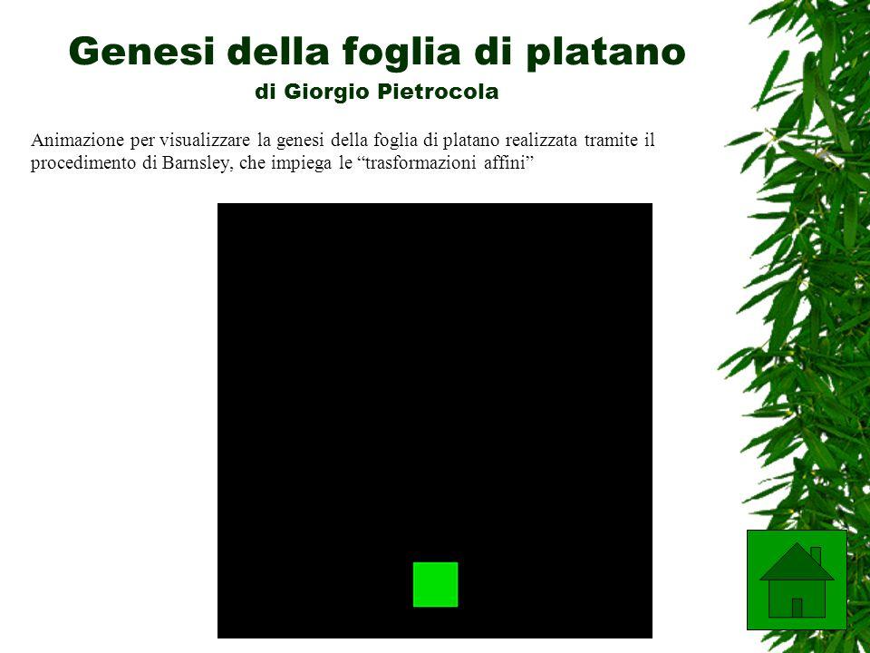 A cura di Ivana Niccolai Genesi della foglia di platano di Giorgio Pietrocola Animazione per visualizzare la genesi della foglia di platano realizzata tramite il procedimento di Barnsley, che impiega le trasformazioni affini