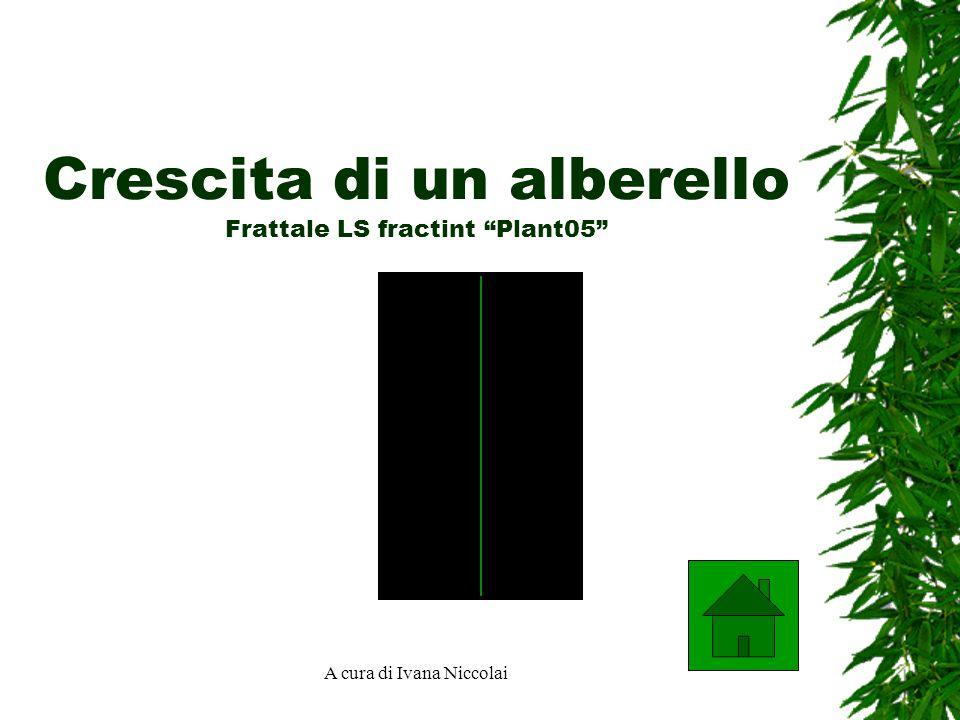 A cura di Ivana Niccolai Crescita di un alberello Frattale LS fractint Plant05