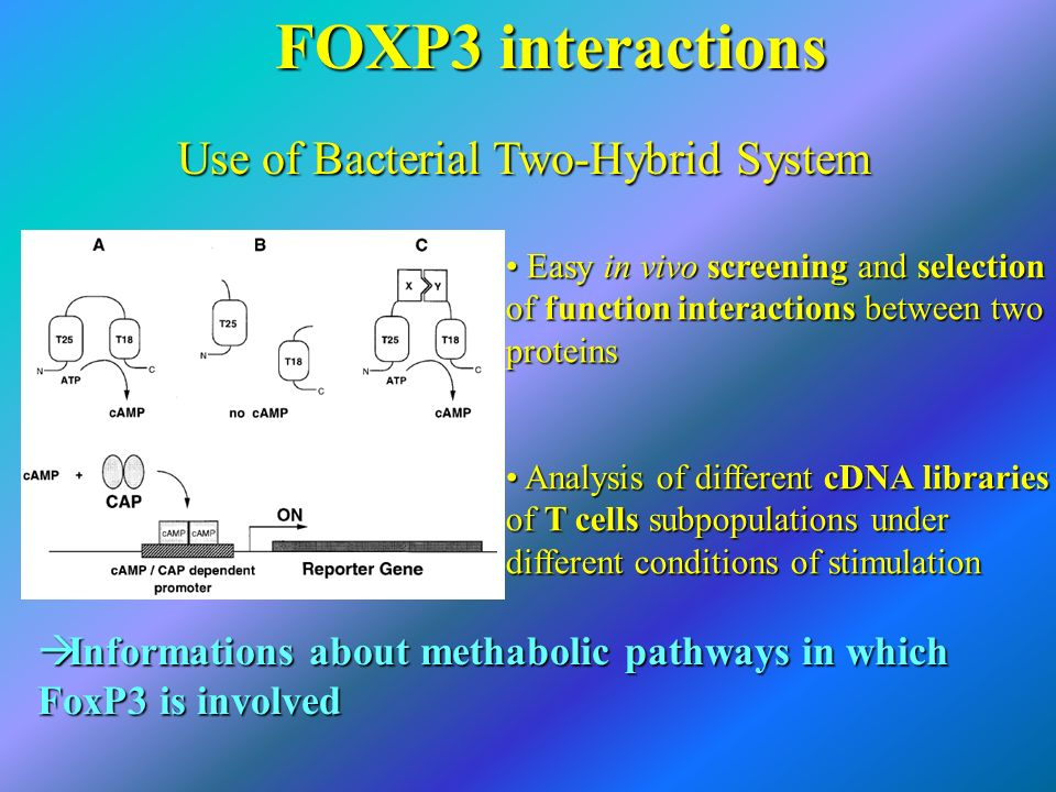 FOXP3 interactions Use of Bacterial Two-Hybrid System Easy in vivo screening and selection of function interactions between two proteins Easy in vivo