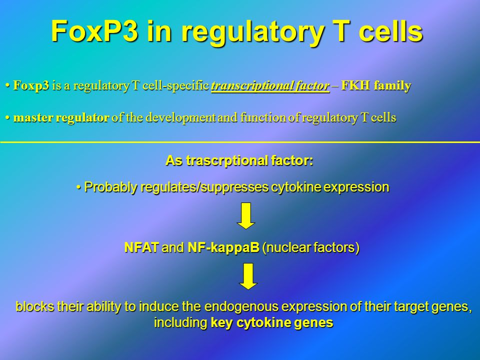 FoxP3 in regulatory T cells Foxp3 is a regulatory T cell-specific transcriptional factor – FKH family Foxp3 is a regulatory T cell-specific transcript