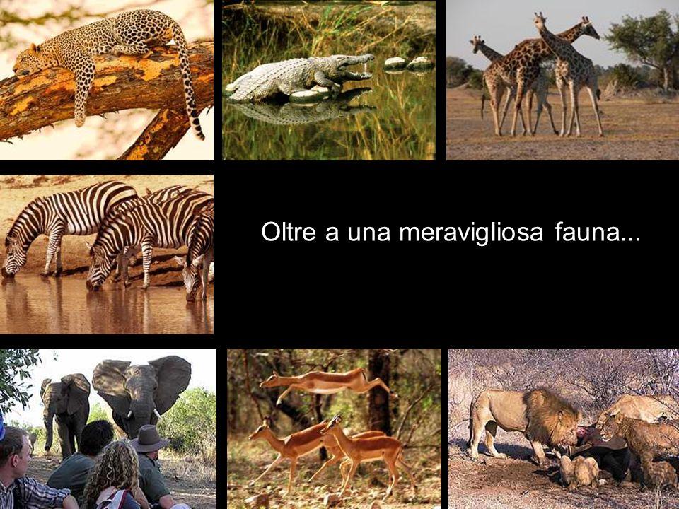 Oltre a una meravigliosa fauna...