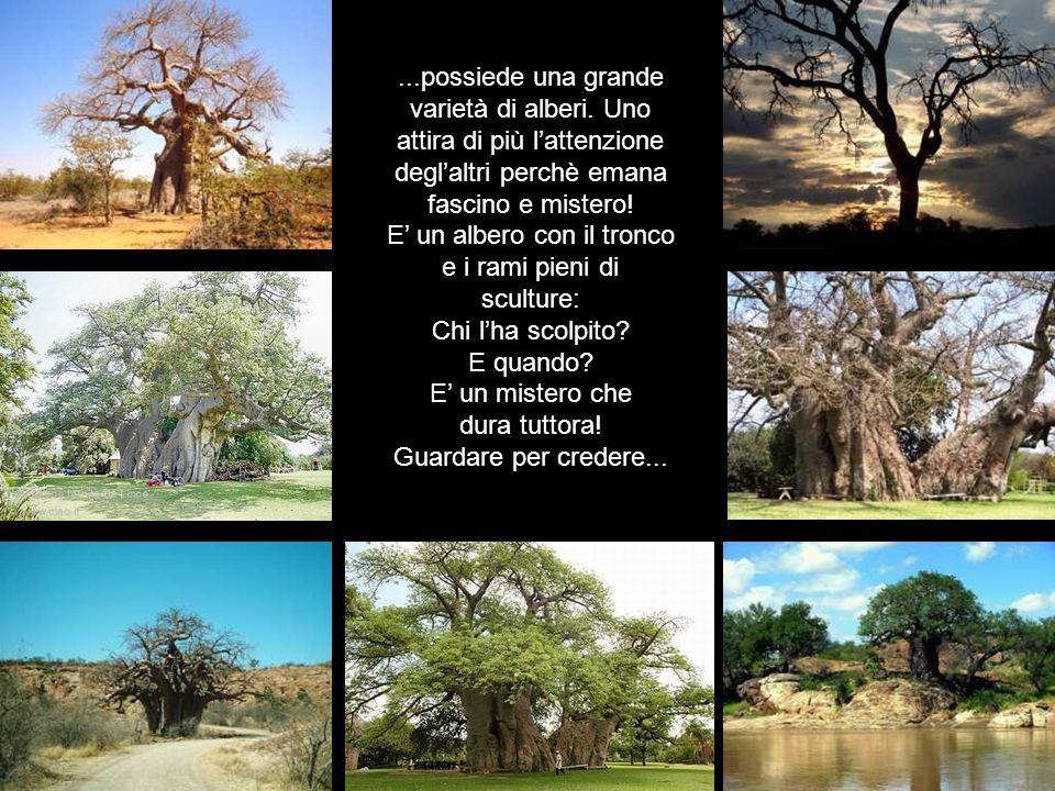 ...possiede una grande varietà di alberi.