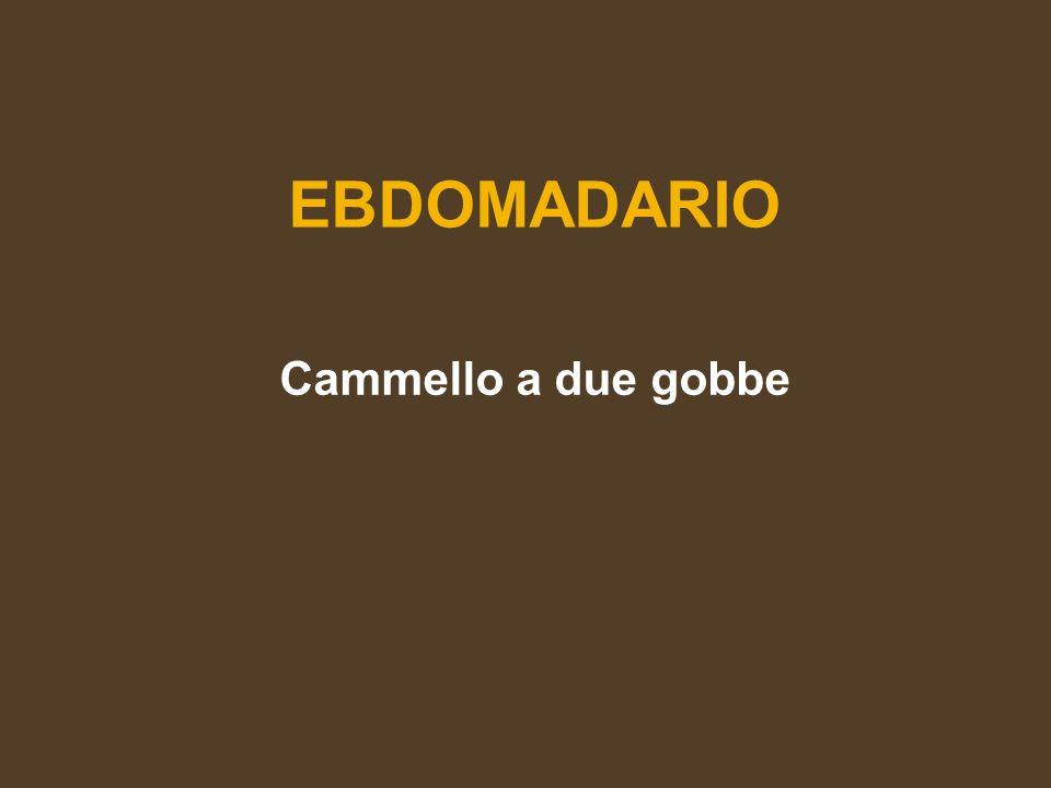 EBDOMADARIO Cammello a due gobbe