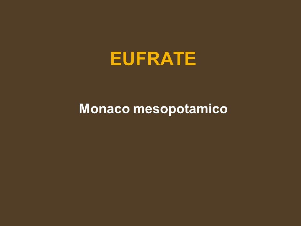 EUFORICO Buco allegro