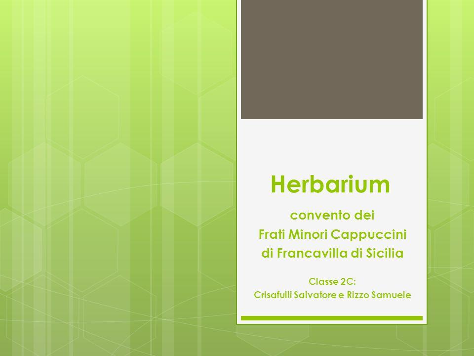 Herbarium convento dei Frati Minori Cappuccini di Francavilla di Sicilia Classe 2C: Crisafulli Salvatore e Rizzo Samuele