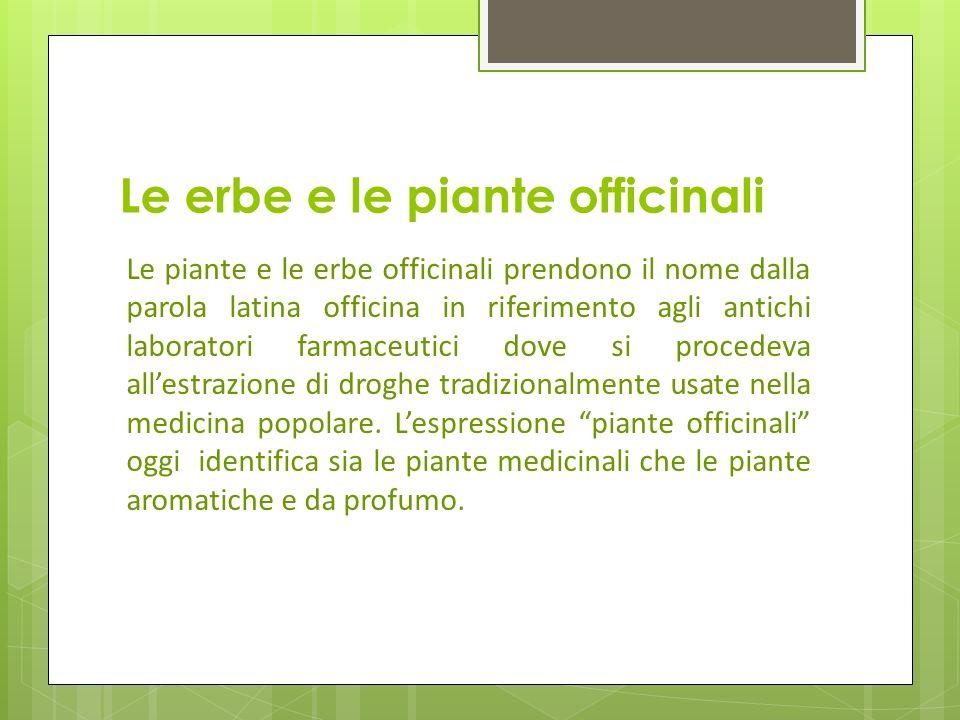 Le erbe e le piante officinali Le piante e le erbe officinali prendono il nome dalla parola latina officina in riferimento agli antichi laboratori far