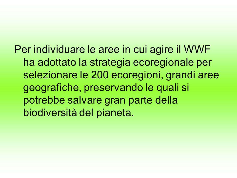 Per individuare le aree in cui agire il WWF ha adottato la strategia ecoregionale per selezionare le 200 ecoregioni, grandi aree geografiche, preserva