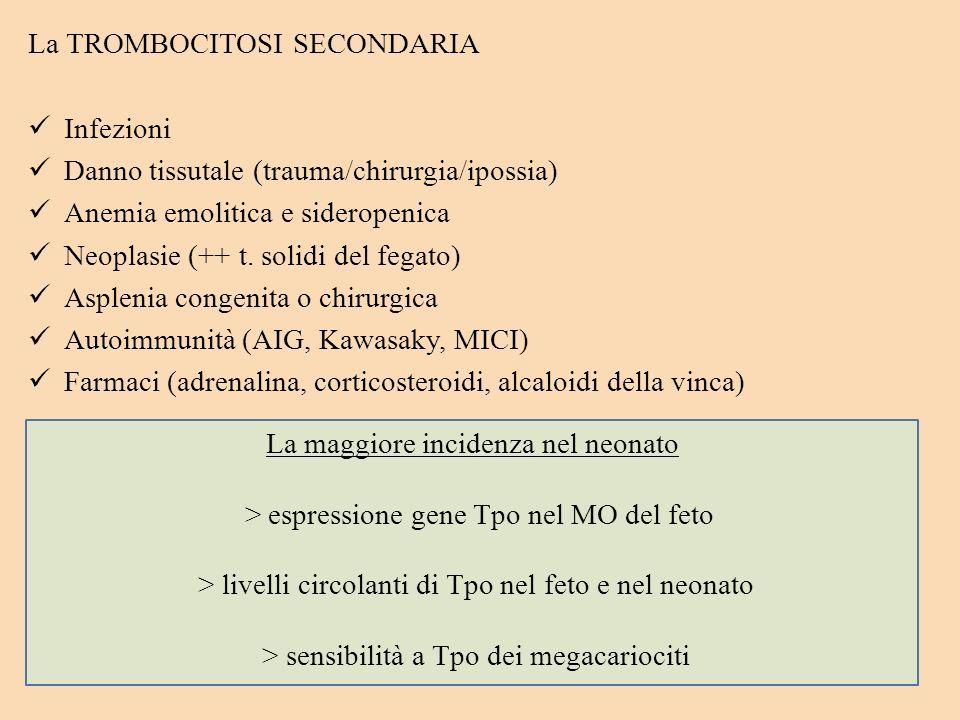 Gravidanza a rischio (eclampsia, PROM, DM, oligoidramnios) Prematurità RDS Cardiopatie congenite Esposizione in utero a farmaci e droghe La TROMBOCITO