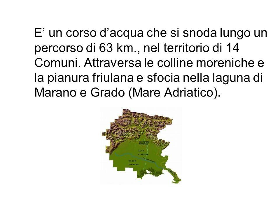 E un corso dacqua che si snoda lungo un percorso di 63 km., nel territorio di 14 Comuni. Attraversa le colline moreniche e la pianura friulana e sfoci