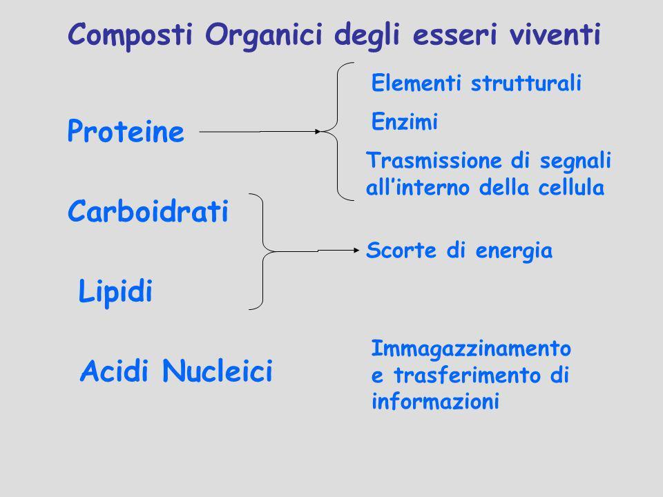 Composti Organici degli esseri viventi Proteine Carboidrati Lipidi Acidi Nucleici Elementi strutturali Trasmissione di segnali allinterno della cellul