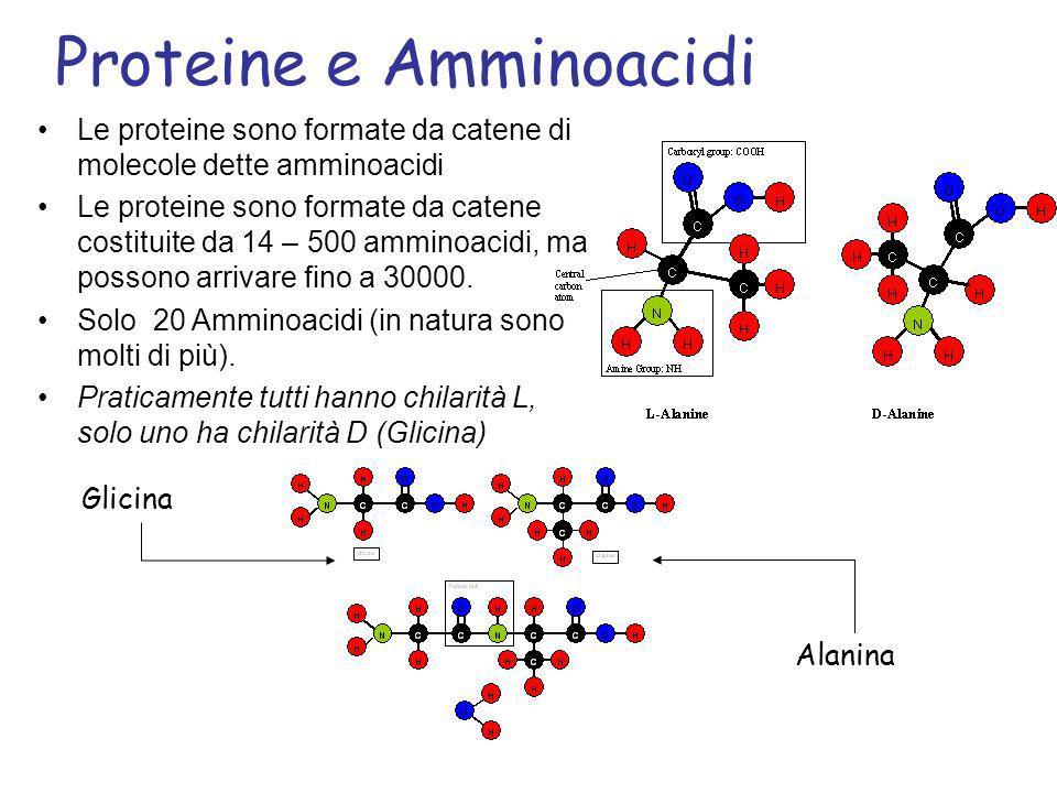 Le proteine sono formate da catene di molecole dette amminoacidi Le proteine sono formate da catene costituite da 14 – 500 amminoacidi, ma possono arr