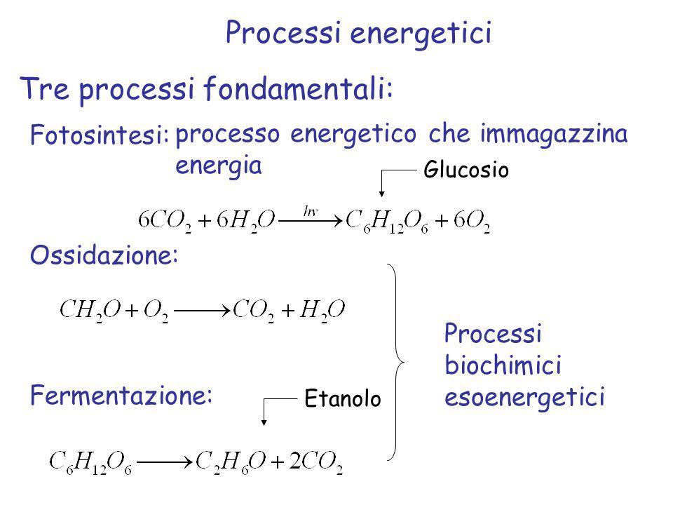 Tre processi fondamentali: Fotosintesi: Ossidazione: Fermentazione: Glucosio Processi energetici processo energetico che immagazzina energia Etanolo P