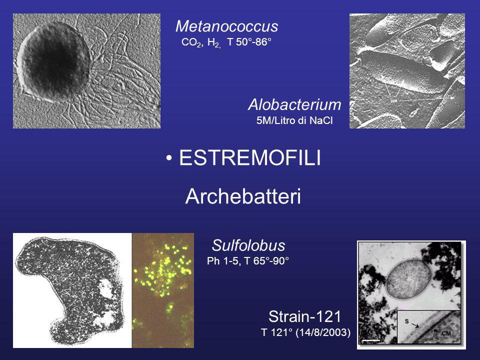 ESTREMOFILI Archebatteri Metanococcus CO 2, H 2, T 50°-86° Alobacterium 5M/Litro di NaCl Sulfolobus Ph 1-5, T 65°-90° Strain-121 T 121° (14/8/2003)