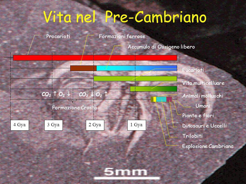 ProcariotiFormazioni ferrose Accumulo di Ossigeno libero Eucarioti Vita multicelluare 4Gya3 2 1 Animali molluschi Esplosione Cambriana Trilobiti Dinos