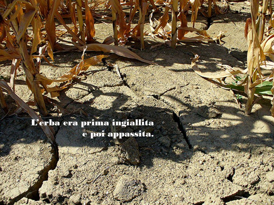 Una tremenda siccità aveva ghermito la regione.
