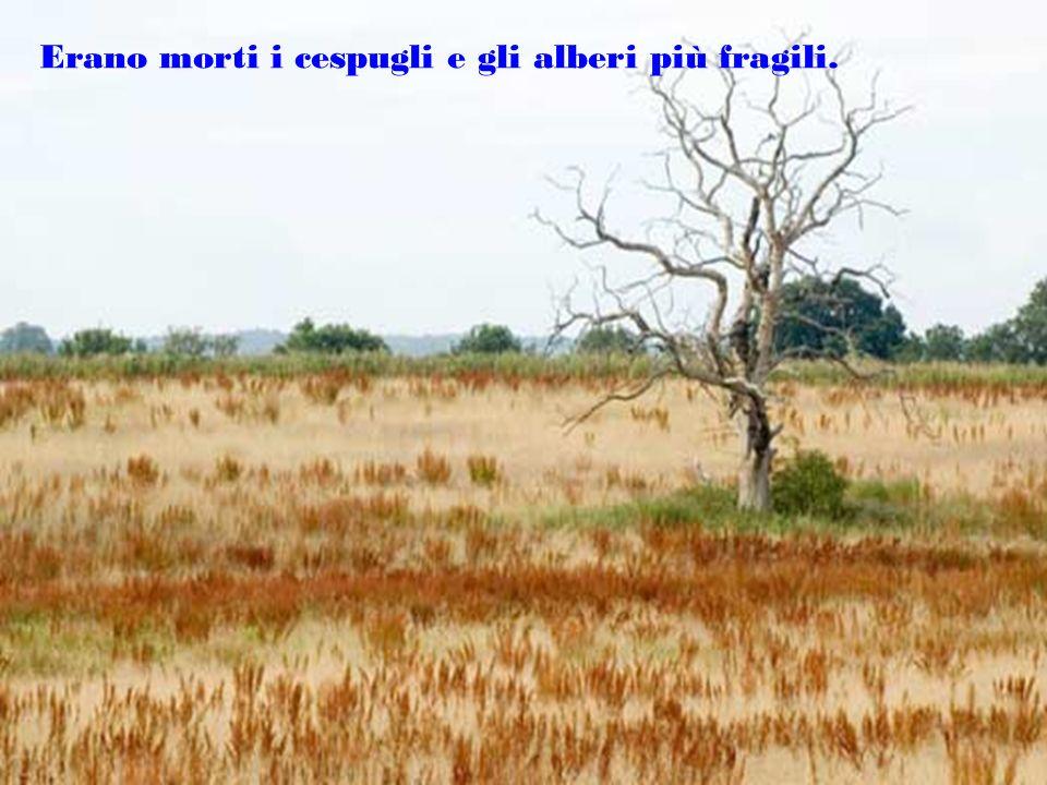 Erano morti i cespugli e gli alberi più fragili.