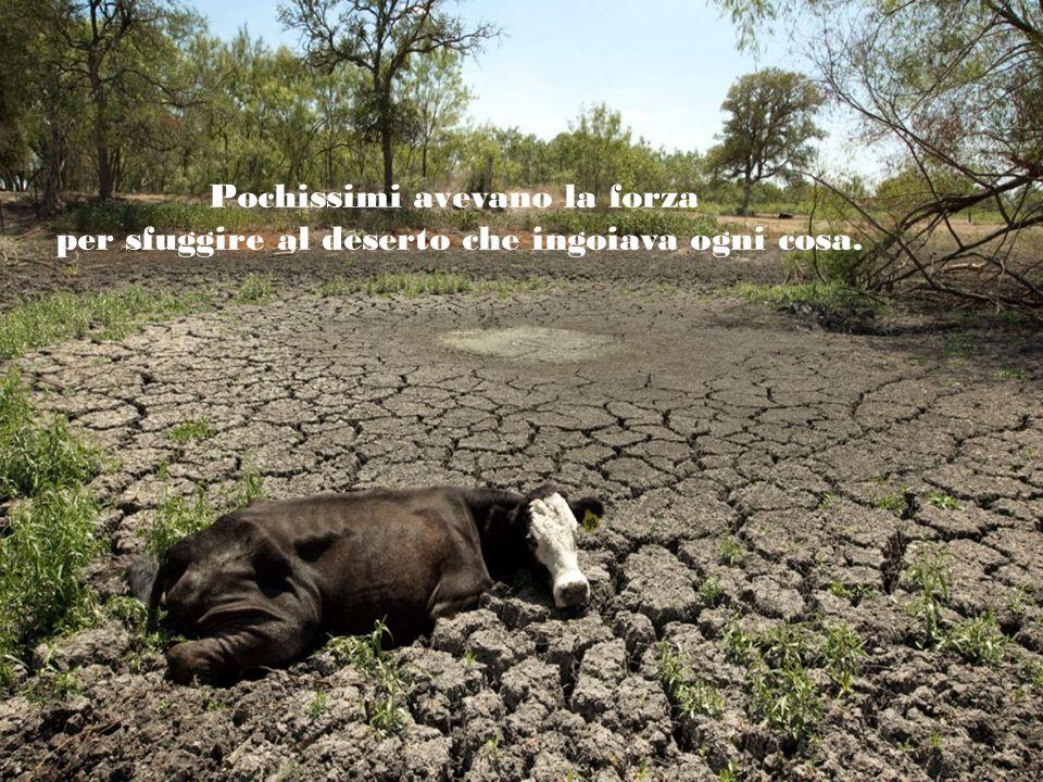 A migliaia gli animali piccoli e grandi stavano morendo.