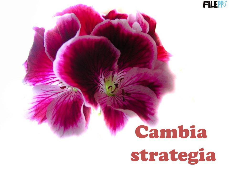 Cambia strategia