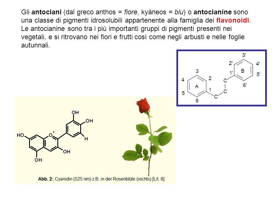 Il colore delle antocianine può variare dal rosso al blu e dipende dal pH del mezzo in cui si trovano e dalla formazione di sali con metalli pesanti presenti in quei tessuti.