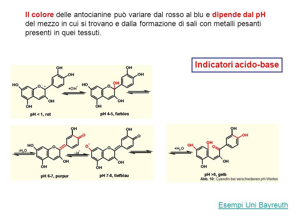 Il colore delle antocianine può variare dal rosso al blu e dipende dal pH del mezzo in cui si trovano e dalla formazione di sali con metalli pesanti p