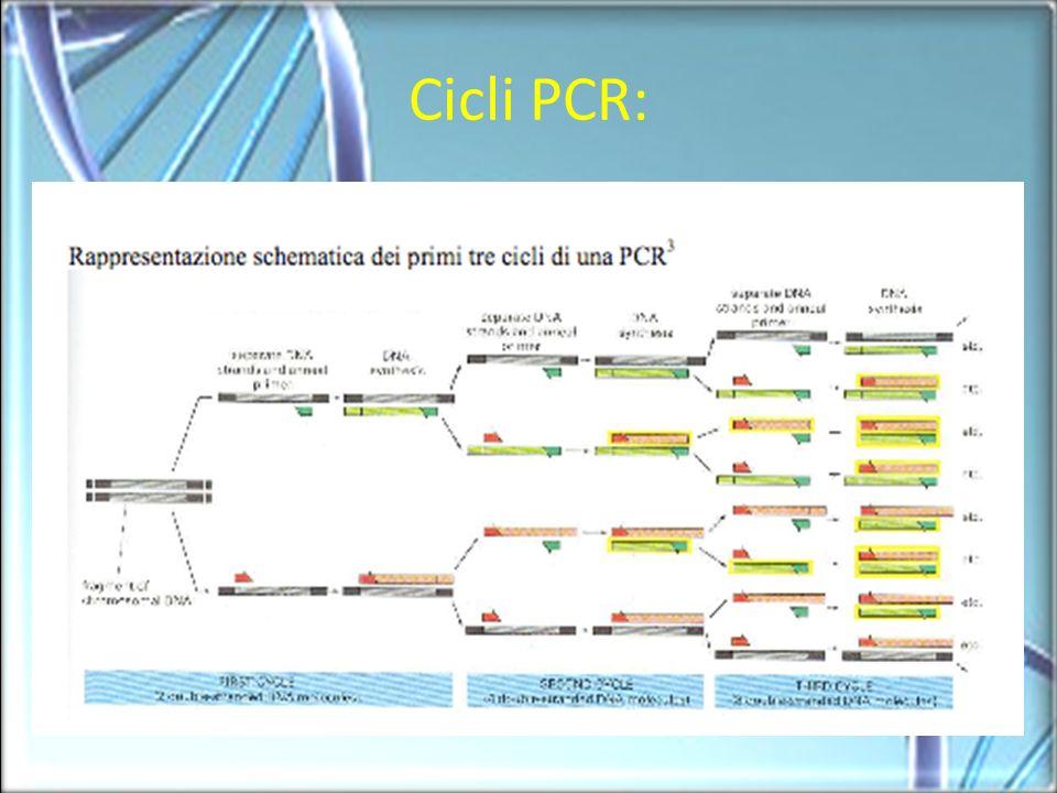 Cicli PCR: