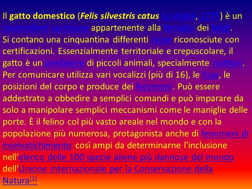 Il gatto domestico (Felis silvestris catus S CHREBER, 1775) è un mammifero carnivoro appartenente alla famiglia dei felidi. Si contano una cinquantina