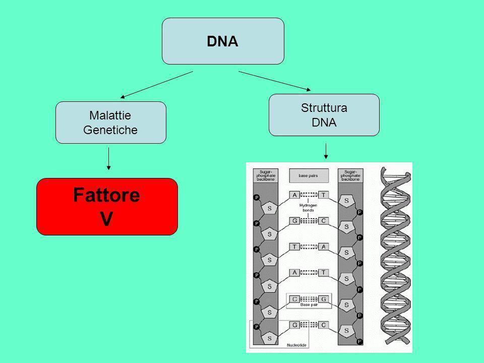 DNA Malattie Genetiche Struttura DNA Fattore V