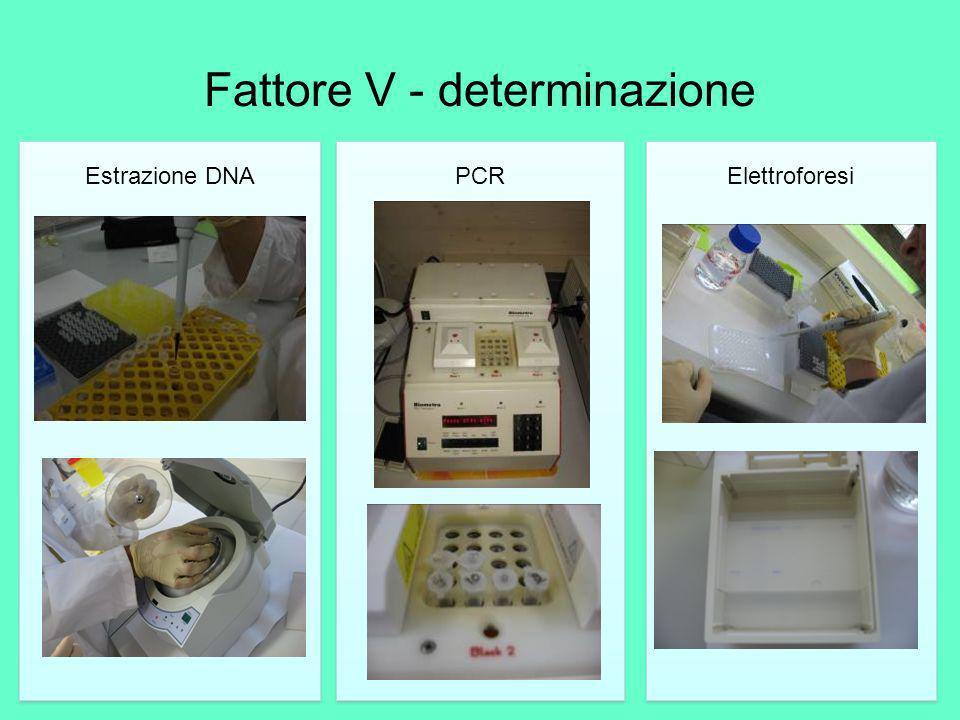 Fattore V - determinazione Estrazione DNA PCR Elettroforesi