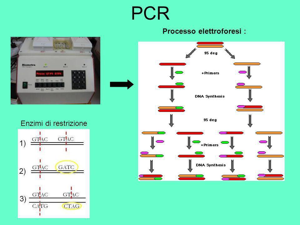 Elettroforesi 4 possibili lunghezze differenti dei frammenti A + B + C Omozigote sano A + B + C Omozigote sano A + B + C + D Eterozigote (portatore) A + B + C + D Eterozigote (portatore) A +D Omozigote malato A +D Omozigote malato 3 Possibili risultati :