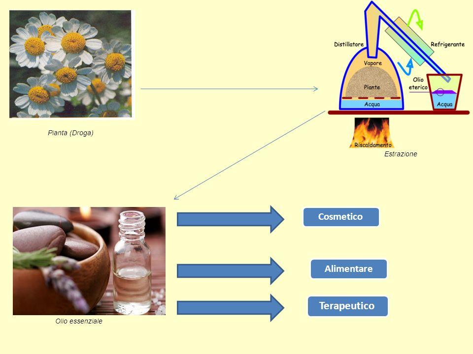 Pianta (Droga) Estrazione Olio essenziale CosmeticoAlimentare Terapeutico