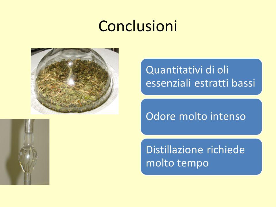 Conclusioni Quantitativi di oli essenziali estratti bassi Odore molto intenso Distillazione richiede molto tempo