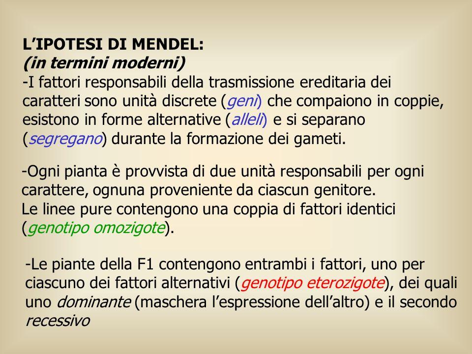 LIPOTESI DI MENDEL: (in termini moderni) -I fattori responsabili della trasmissione ereditaria dei caratteri sono unità discrete (geni) che compaiono