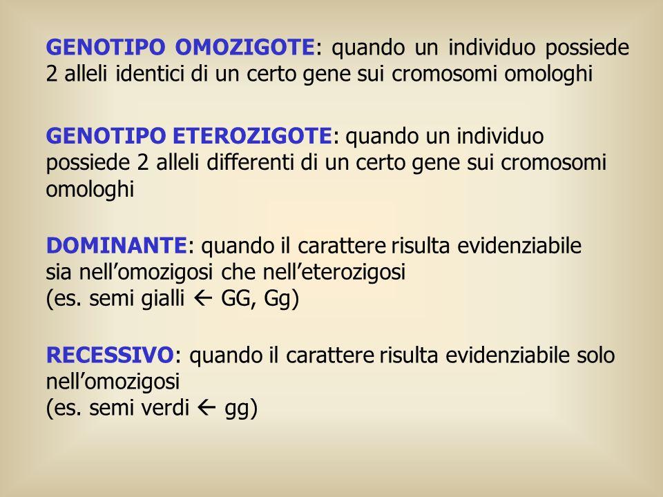 GENOTIPO OMOZIGOTE: quando un individuo possiede 2 alleli identici di un certo gene sui cromosomi omologhi GENOTIPO ETEROZIGOTE: quando un individuo p