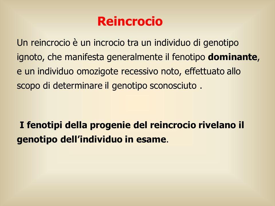 Reincrocio Un reincrocio è un incrocio tra un individuo di genotipo ignoto, che manifesta generalmente il fenotipo dominante, e un individuo omozigote