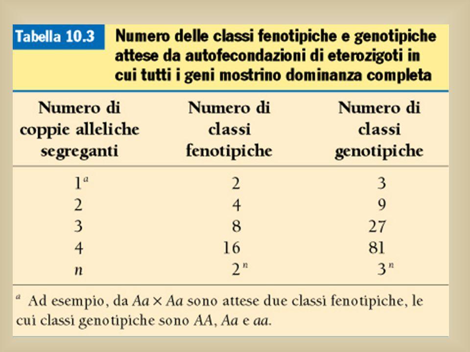 Alla F2 ci sono 2 n classi fenotipiche, dove n è il numero di coppie alleliche in eterozigosi che si distribuiscono in modo indipendente Inoltre il nu