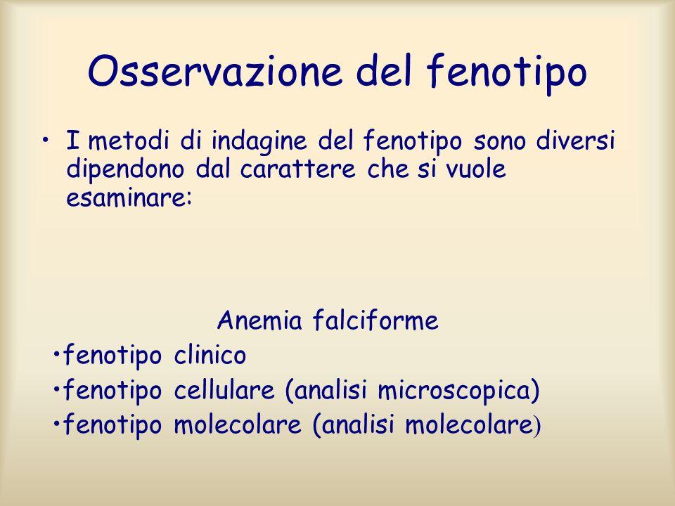Osservazione del fenotipo I metodi di indagine del fenotipo sono diversi dipendono dal carattere che si vuole esaminare: Anemia falciforme fenotipo cl
