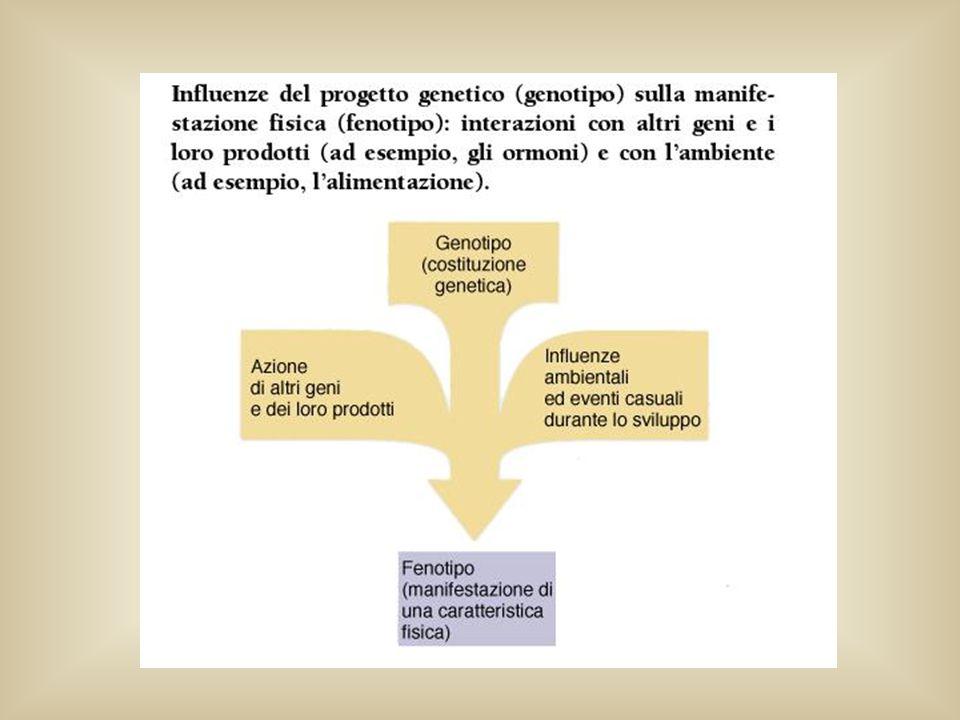 ANALISI MENDELIANA Principi basilari della trasmissione dei geni Non sapendo che….