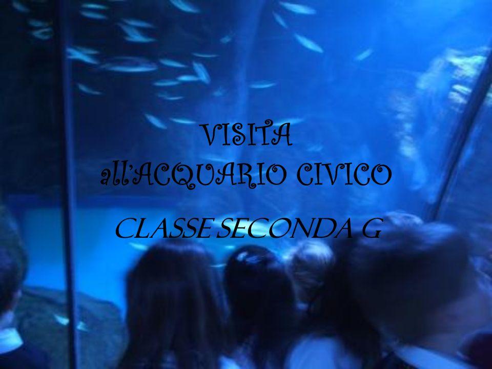VISITA allACQUARIO CIVICO CLASSE SECONDA G