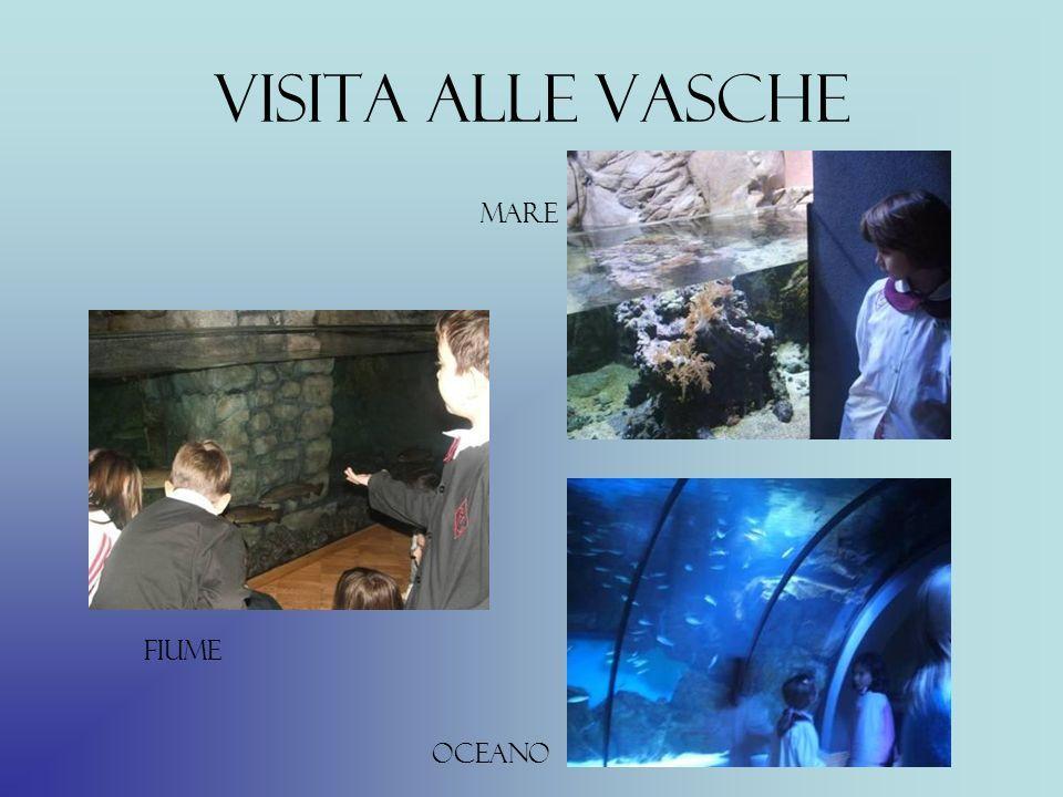 Visita alle vasche fiume mare oceano