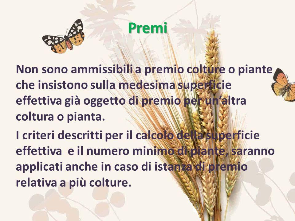 Non sono ammissibili a premio colture o piante che insistono sulla medesima superficie effettiva già oggetto di premio per unaltra coltura o pianta.