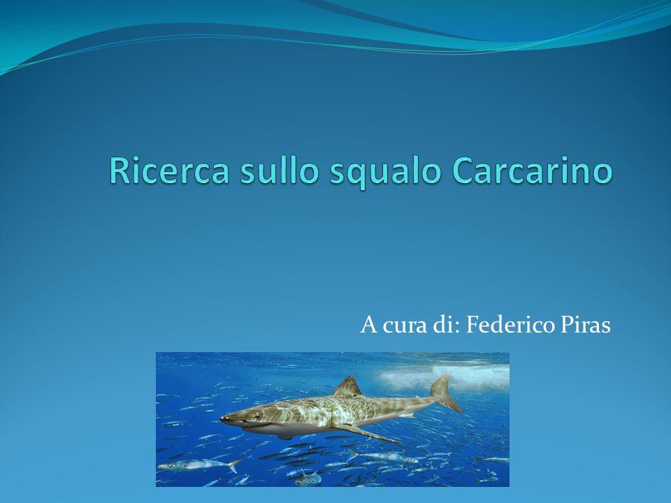 A cura di: Federico Piras