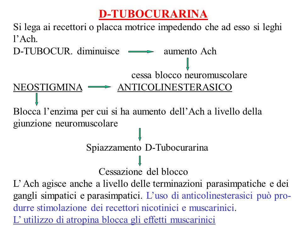 D-TUBOCURARINA Si lega ai recettori o placca motrice impedendo che ad esso si leghi lAch. D-TUBOCUR. diminuisce aumento Ach cessa blocco neuromuscolar