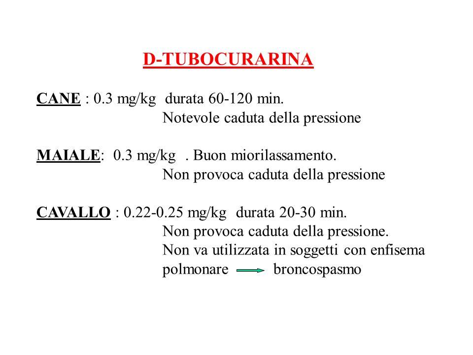 D-TUBOCURARINA CANE : 0.3 mg/kg durata 60-120 min. Notevole caduta della pressione MAIALE: 0.3 mg/kg. Buon miorilassamento. Non provoca caduta della p